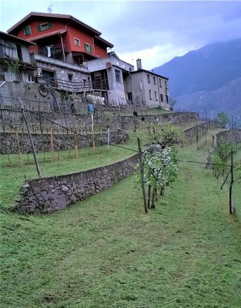 azienda vinicola Rodella